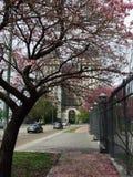Blommor på gatan Arkivfoton