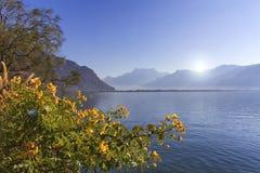 Blommor på Genève sjön, Montreux, Schweiz Royaltyfri Fotografi