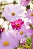 Blommor på grön vit grön guling för mer blå bakgrundsfärg royaltyfria bilder