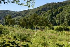 Blommor på gröna banker av den Donau floden nära Thiergarten, Tyskland Royaltyfri Bild