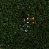 Blommor på grönt gräs Royaltyfria Bilder