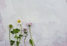 Blommor på grungy bakgrund Royaltyfri Bild