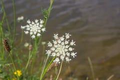Blommor på havet Royaltyfri Bild