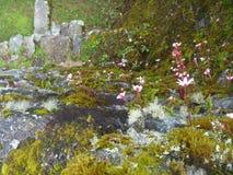 Blommor på Inca skuggar till Machu Picchu, Peru Fotografering för Bildbyråer