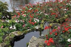 Blommor på Keukenhof i Holland, Nederländerna Fotografering för Bildbyråer