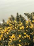Blommor på klippan Arkivbild