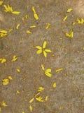 Blommor på konkret bakgrund Arkivbilder