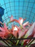 Blommor på korgen Royaltyfri Foto