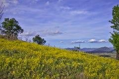 Blommor på kullen Arkivbilder