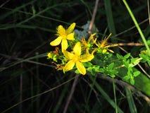 blommor på kullen nära floden Royaltyfri Foto