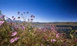 Blommor på Lashihai sjön Arkivbild
