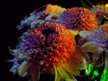 Blommor på mörk bakgrund Arkivfoto
