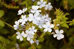 Blommor på madeiran Arkivfoto