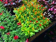 Blommor på marknaden för bonde` s royaltyfria foton