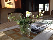 Blommor på matställetabellen Royaltyfri Bild