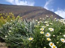 Blommor på monteringen Teide Arkivbilder