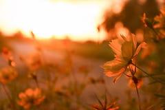 Blommor på morgonsolljusbakgrund Arkivfoton