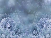 Blommor på oskarp blå bakgrundsbokeh Blått blommar krysantemumet alla några objekt för den blom- illustrationen för sammansättnin Arkivbild
