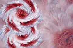 Blommor på oskarp vit-röd-grå färger bakgrund röd-vit blommar krysantemumet blom- collage vita tulpan för blomma för bakgrundssam Royaltyfri Foto