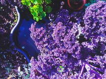 Blommor på pölen Royaltyfri Fotografi
