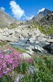 Blommor på packa ihop av ett berg strömmer royaltyfri bild