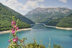Blommor på Pivsko sjön, Montenegro royaltyfria foton