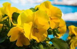 Blommor på Rapallo Arkivbild