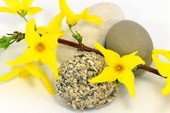 Blommor på rocksna Arkivfoton