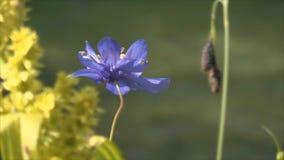 Blommor på sjön arkivfilmer