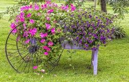 Blommor på skärm Fotografering för Bildbyråer
