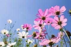 Blommor på skybakgrund Arkivbilder