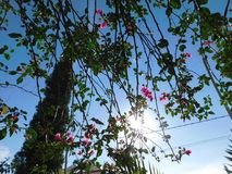 Blommor på solljus Arkivfoton