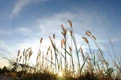 Blommor på soluppgång för bakgrund fotografering för bildbyråer
