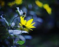 Blommor på soluppgången med någon bokeh Arkivbilder