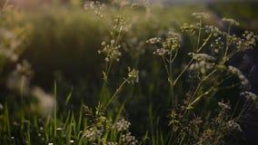 Blommor på suddig bakgrund arkivfilmer