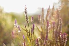 Blommor på suddig bakgrund royaltyfri foto