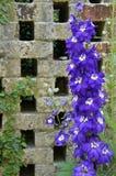 Blommor på tegelstenväggen Fotografering för Bildbyråer