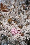Blommor på trädet i vår Arkivbilder