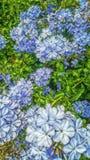 Blommor på trädgården Arkivbilder