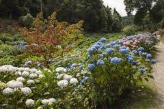 Blommor på Trebah trädgårdar, Cornwall Arkivfoto