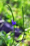 Blommor på vägrenen royaltyfria bilder