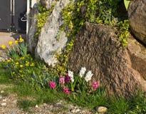 Blommor på vagga Royaltyfri Bild