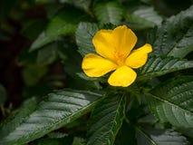 Blommor på vattenträdgårdar av Vaipahi, Tahiti, franska Polynesien Royaltyfria Bilder