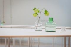 Blommor på Ventura Lambrate utrymme under den Milan Design veckan Royaltyfri Fotografi