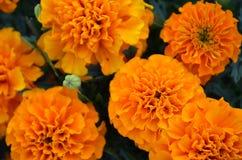blommor på vit Royaltyfri Fotografi