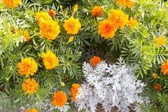 blommor på vit Arkivbilder