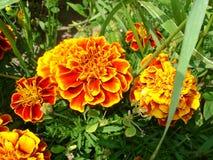 blommor på vit Fotografering för Bildbyråer