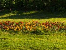 Blommor parkerar in Arkivfoton