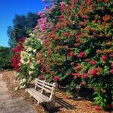 Blommor parkerar förbi bänken Royaltyfria Bilder