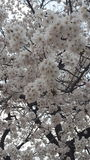 Blommor parkerar in i Sydkorea Royaltyfria Bilder